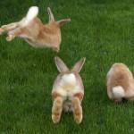 #PlaylistCM: Corre na Páscoa, mulherada!